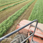 US Alfalfa Farmers Also Now Facing GMO Contamination