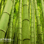 Eco Friendly Materials : How to Go Green with Bamboo Fiber