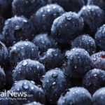 Why Blueberries are So Healthy for You