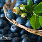 Top Ways Blueberries Help Fight Cancer