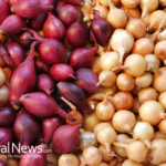 Shallots lower risk for cancer, diabetes, and osteoporosis