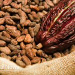 Raw Cacao – Benefits of Real Chocolate!