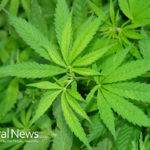 Marijuana found to heal bone fractures and aid in treatment of osteoporosis!