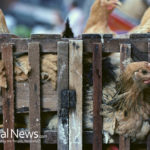 Poultry Inspection by USDA Changes Drastically