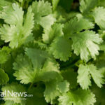 How to Use Cilantro As Medicine: Detox Your Body of Heavy Metals & Beat Chronic Inflammation