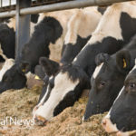 Ag-Gag Laws: The Most Dangerous Threat To Farm Animal Welfare