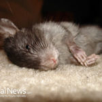 Is Animal Testing Really Necessary?