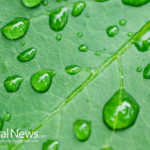 5 Ways How Neem is Good For You