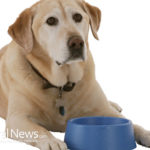 Reasons To Feed Your Dog A Natural Diet