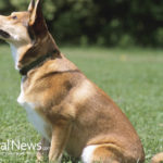Healing Hounds: 3 Natural Methods for Improving a Dog's Health