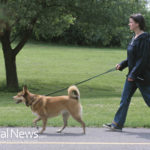 Contagious Viruses Spread at Dog Parks: Even in Cold Weather