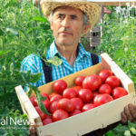 How to Grow Lycopene-Rich Foods in Your Garden