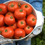 Tomatoes for Your Gout