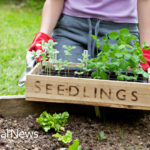 7 Tips for Horticulture Heaven with Raised Garden Beds