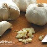 Eating raw, pulverized garlic every day reduces the risk of lung and bowel cancer 40%
