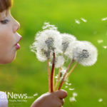 The Health Benefits of the Humble Dandelion