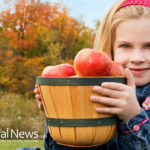 4 Steps to Staying Healthy This Fall