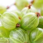 Gooseberry (Amla) contains nearly 20 times vitamin C as orange juice
