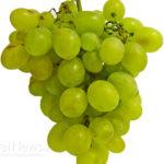 Medicinal Properties of Grape Seeds