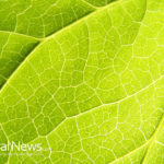 Kratom and Diabetes
