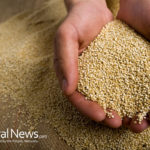 Top 6 Good Carbohydrates for Weight Loss