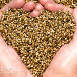 Hemp Seeds for An Energized Life