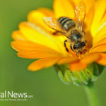 Bee Pollen Miracle: 10 Proven Powerful Benefits