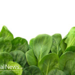 Landmark Study on Health Benefits of Spinach Proves Real Food Is the Best Medicine