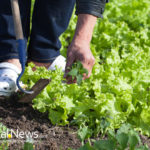 7 Homemade Garden Remedies that Pro Gardeners Love