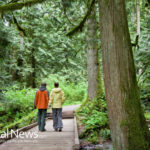Forest Bathing: A New Way to Reduce Stress and Lower Blood Pressure by as much as 13%