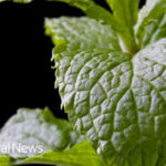 Power of Peppermint: 17 Health Benefits Revealed