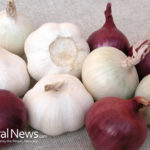 Cancer prevention via Onion and Garlic