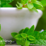 12 Plants and Herbs That Heal Respiratory Infections and Repair Pulmonary Damage