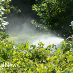 How and Why I Protect Myself from Glyphosate