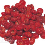 Why Raspberries are so Good for You!