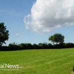 Effective Tips For Maintaining A Chemical Free Lawn