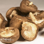 Shiitake, medicinal vegetable for hormone balance and liver