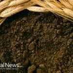 Biochar – Enriching Your Soil & Saving the Planet!