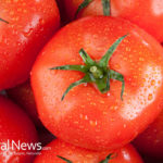 Tomato, the medicinal use of a vegetable
