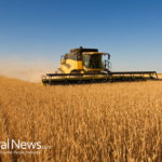 South Korea joins Japanese ban on U.S. wheat imports after shocking GMO contamination announcement by USDA