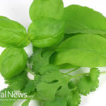 14 Foods & Herbs To Cleanse Blood Toxins‏ Naturally
