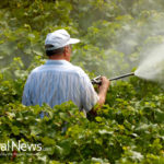 Pesticide Guide For Safe Fruits And Vegetables