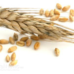"""Do You Have """"Grain Brain""""? Why a Low-Fat, High-Carb Diet is Bad News for Your Brain"""