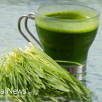 8 Great Reasons to Add Wheatgrass to Your Diet