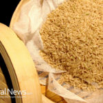Rice bran increases growth of natural killer cells and improves immunity