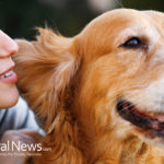 PET CONDITIONS: GETTING HELP THE NATURAL WAY