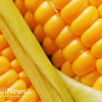Corn: yes, it is a proven health food, and here are 3 reasons why