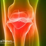 Cartilage: Cushion protection