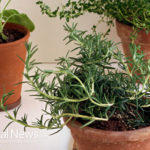 8 Natural Healing Benefits of Rosemary