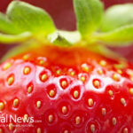 Nerina Strawberries: A New Superfruit